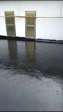 双虹厂家911聚氨酯防水涂料双组份聚氨酯油性聚氨酯防水涂料图片