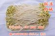 榆林小型豆芽发芽机器图片,去哪买全自动豆芽机械