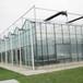 供应巨丰棚业玻璃温室大棚