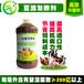 发酵豆腐渣做饲料喂猪的正确方法豆渣发酵剂厂家直销