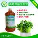 芽苗菜的种植方法及技巧芽苗生态宝厂家直销
