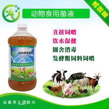 养鸡户自配饲料注意事项益富源动物食用菌哪里购买