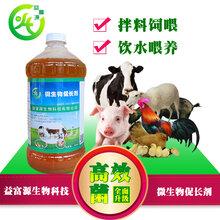 降低肉鸡死亡率的四个有效措施微生物促长剂多少钱