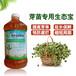 水培花生苗豆苗芽苗菜用什么有機栽培營養液效果好?