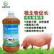 益富源微生物促長劑養豬提高免疫抗病力節省成本
