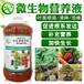 木瓜果園管理的方法技巧植物營養液哪個牌子好怎么購買