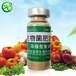菜籽餅粕發酵有機肥用益富源有機肥發酵劑漚肥腐熟劑的方法