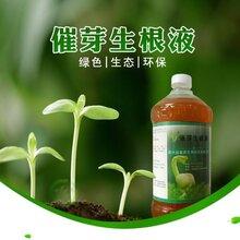 益富源豇豆营养液生根水的使用方法及种植技术图片