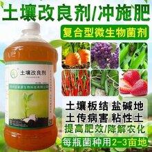 益富源生根水栽培黄花菜的要点及改良剂的作用图片