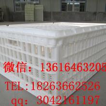 塑料鸡鸭运输筐运输鸡筐价格塑料鸡筐生产厂家