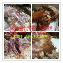 鸡滑液囊支原体的危害是什么,为什么产蛋鸡没有高峰?