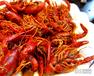 十三香龙虾培训班,油焖龙虾技术培训,卤龙虾的做法