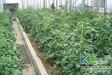 实用的种菜技术有机无土栽培
