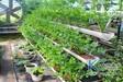 无土栽培的七大特点