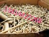 松原电线电缆回收市场价格