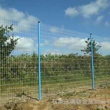 安平供应荷兰网、铁丝篱笆、养殖荷兰网厂家直销