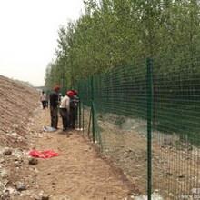 安平厂家供应6x6荷兰网、铁丝篱笆、铁丝浸塑护栏网厂家直销