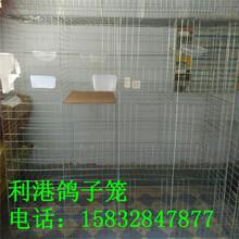 河北利港笼具生产制作三层12位鸽笼四层16位鸽笼鸽笼批发