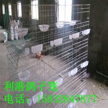 河北利港笼具供应三层12位四层16位鸽子笼1.5x2米1.7x2米1.8x2米