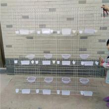 批发鸽子笼12位鸽笼规格鸽笼价格鸽子笼厂家