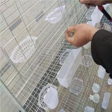 厂家低价批发养殖鸽笼三层12位四层16位肉鸽笼