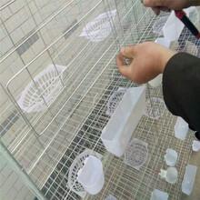 利港笼具批发海南12位鸽子笼12位肉鸽龙1.52米