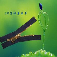 ZLZ拉链中拉5#连体粟米牙金属拉链高档金属拉链环保拉链服装箱包专业拉链