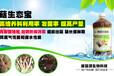 蘑菇种?#24067;?#26415;杏鲍菇香菇平菇猴头菇叶面肥营养液催菇