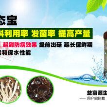 蘑菇种植技术杏鲍菇香菇平菇猴头菇叶面肥营养液催菇