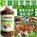 羊肚菌種植用啥營養液翻耕土地防畸形提高產量菌菇補水