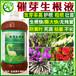 白芨種子專用催芽劑
