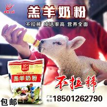 羊吃的奶粉/羔羊专用奶粉大全