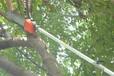 供应!1.5米高枝锯机3米高空树枝修剪机4.5米树梢切割锯