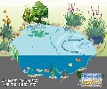 丽水富邦锦鲤池过滤免人工清理