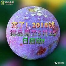 長治銀妃三華李苗廠家供應圖片
