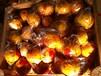 供应孕妇可以多吃的建阳桔柚