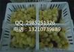耐磨鸡苗箱抗压小鸡筐塑料鸡苗箱生产
