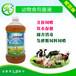 雏鸡养殖促长防治拉稀益生菌营养液厂家直销桐城