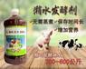 晒水发酵喂猪用什么牌子发酵剂预防猪吃饭拉稀长得慢