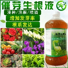 供應黃精塊睫移栽生根劑(ji)圖片