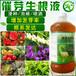 苦參種子催芽劑