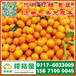阜新振兴路特早柑橘产地直销_振兴路特早蜜橘什么价格