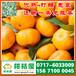 汪清水果特早蜜橘销售价格_水果早熟密桔市场价格