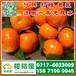 鄂尔多斯蔬菜瓜果特早柑橘产地直销_蔬菜瓜果特早柑子水果价格