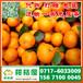 西安西北特早橘子销售价格_西北早熟柑子水果批发