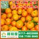 龙井北市场特早桔子代收价格_北市场早熟蜜橘市场价格