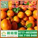 锡林郭勒锡林浩特特早柑子销售价格_锡林浩特特早柑子农产品价格