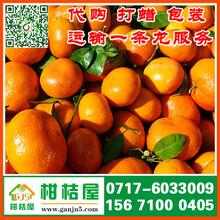 连云港灌南县特早橘子代收价格_灌南县特早柑橘水果市场