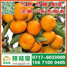 大同市康圆果蔬批发早熟柑橘产地直供浙江衢州早熟柑橘批发价格