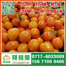 上海市嘉定区特早柑子产地直销_嘉定区特早桔子瓜果批发